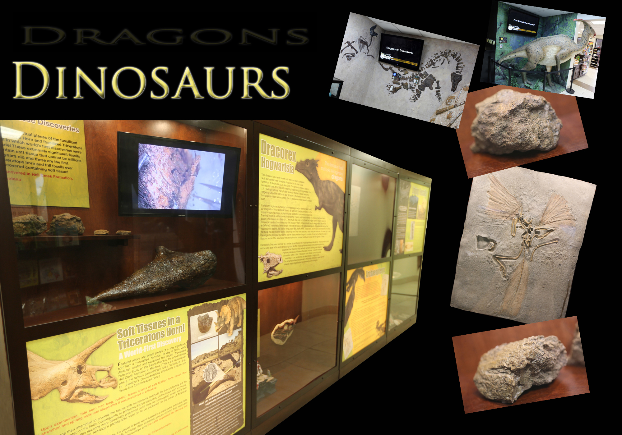 New Exhibit The Mystery Of Dragons And Dinosaurs The