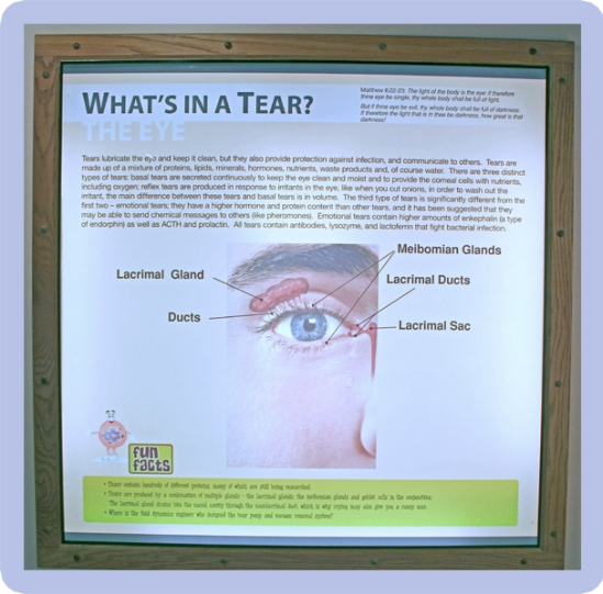 seeing-eye-2-a